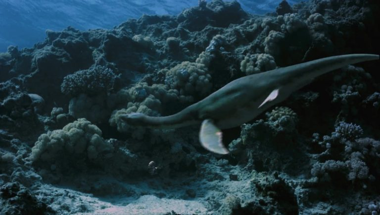 sea-rex-3d-imax